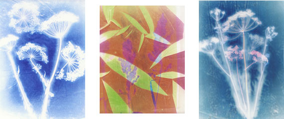 Plant Silhouettes in Heat Transfer Paints