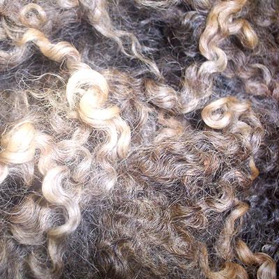 Longwool and Lustre Fleece