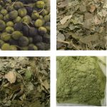 Natural Dyes - Mineral, Substantive or Adjective