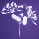 Cyanotype Blue Printing