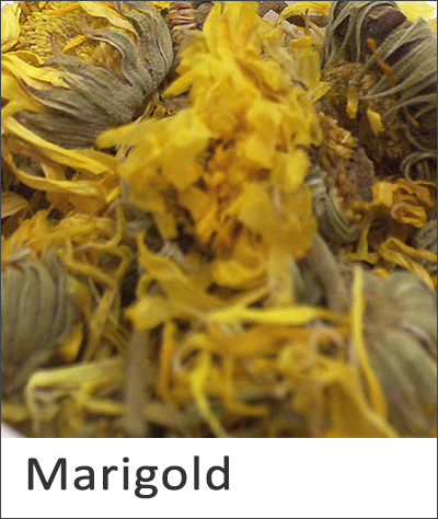 Marigold natural dye