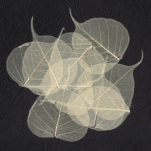 Skeleton Leaves - pack 50, natural